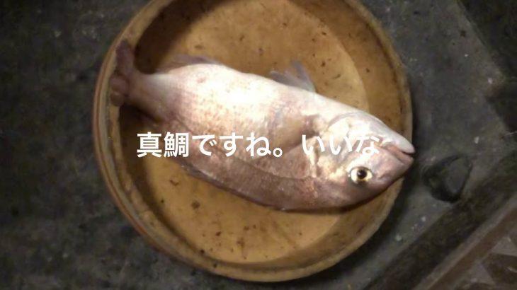 マッチングアプリの女性が真鯛釣りました。