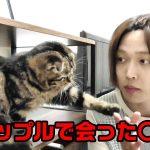 タップル【出会い系】で会った〇〇女の話しを子猫達にするメンヘラ